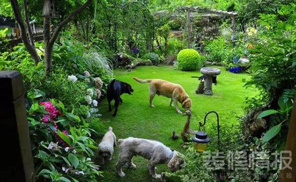 花园4.jpg