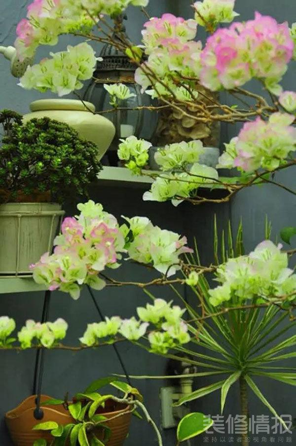 花园15.jpg